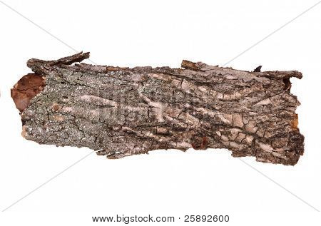 Close-up of isolated cracked stub log bark with wooden texture