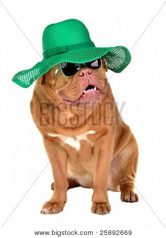 Lady dog wearing green straw hat and sun glasses, isolated