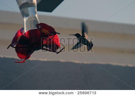 ein Kolibri fliegt bis zu ein Vogel-Feeder für etwas zu essen