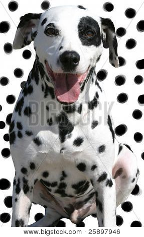 cute isolated spotted dog on spotted background