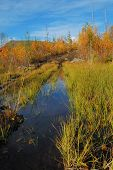 pic of boggy  - Boggy a place - JPG