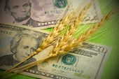 Three Spikes Of Wheat Lie On Us Dollars. A Close-up Of Twenty And Five Dollar Bills And Grain Spikel poster