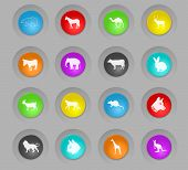 Mammals Colored Plastic Round Buttons Web Icons For User Interface Design poster