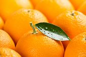 Orange Background. Orange Fruits With Green Leaf With Drops. Short Depth Of Field, With Focus On The poster
