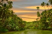 Rainforest river cruise in sunset light