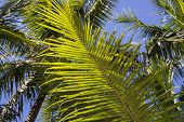 Vibrant Green Palm Leaf Closeup Photo. Beautiful Tropical Landscape Photo. Exotic Place For Vacation poster
