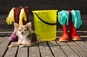 Small dog lying at sunny veranda near items for cleaning and rubber boots