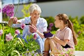 gardening, family and people concept - happy grandmother and granddaughter planting flowers at summe poster
