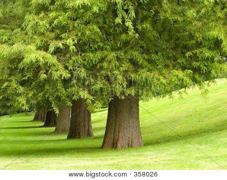 Treeline Iii