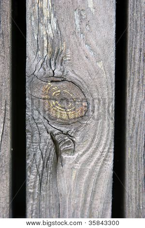 Knothole On A Wood Plank