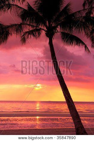 Bay View Palm Paradise