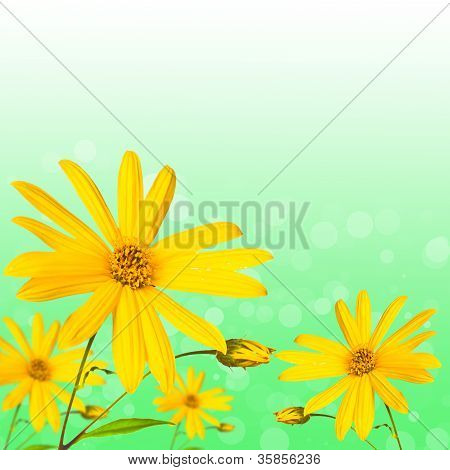Summer Flower On Green Abstract Background
