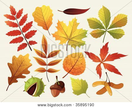 A collection of colorful autumn leaf designes. Isolated