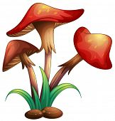 picture of crimini mushroom  - illustration of red mushrooms on a white background - JPG