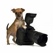 image of chiwawa  - Chiuahua puppy with photo camera - JPG