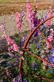 pic of split rail fence  - This vertical summer image has pastel colored larkspur flowers  - JPG