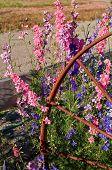 image of split rail fence  - This vertical summer image has pastel colored larkspur flowers  - JPG
