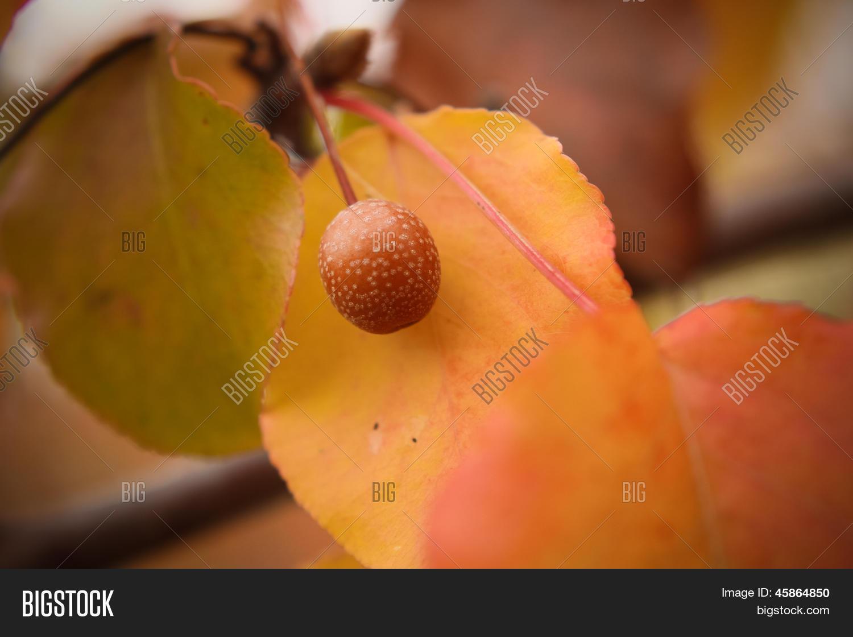e7f359c4207b http://www.bigstock.com.br/image-45864748/stock-vector-ilustra%C3 ...