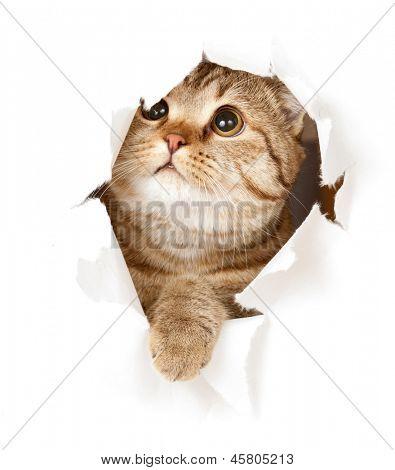 gato en el agujero de papel