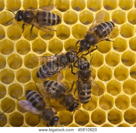 Communication Bees