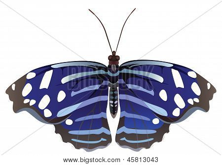 Abstract Exotic Butterfly.