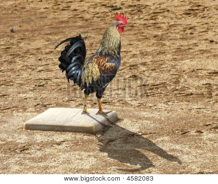 Rooster On Third Base
