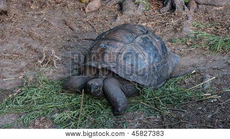 Iles Des Palmes On Praslin Seychelles
