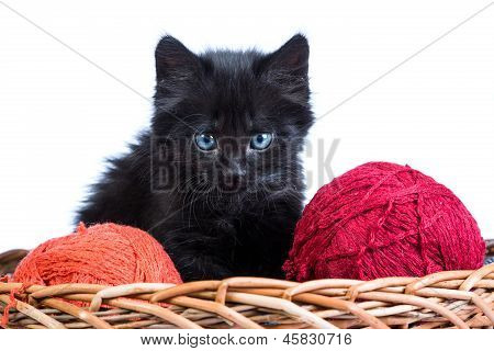Black Kitten Playing With A Red Ball Of Yarn On White Background