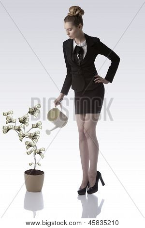 Beautiful Business Woman With Watering Can Near Dollars Plant