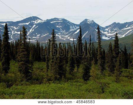 Alaska Mountains & Trees