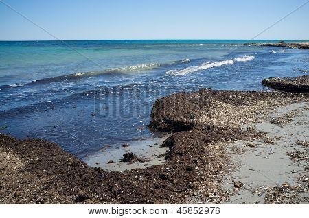Fouling Sea Weed