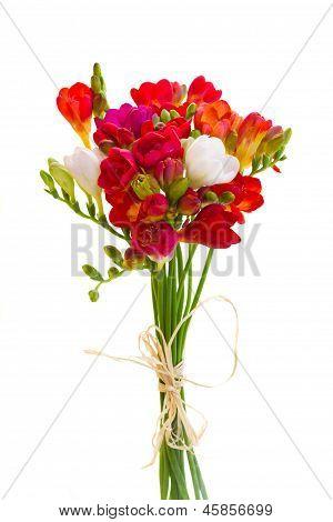 ramo de flores rojas freesia