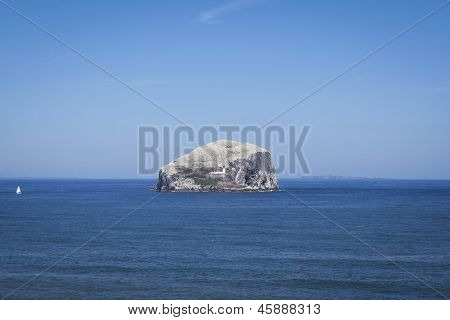 Bass Rock Seabird Colony Scotland