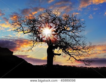 Alone Tree With Sun And Color Red Orange Yellow Sky
