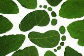 stock photo of carbon-footprint  - This image depicts the carbon footprint and green living - JPG