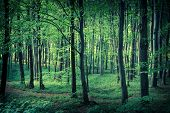 Mysterious Dark Forest Near Rzeszow, Poland