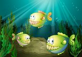 picture of piranha  - Illustration of the three piranhas under the sea with seaweeds - JPG