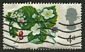 UK - CIRCA 1967: A stamp printed in UK shows image of the Hawthorn and Bramble, British Flora, circa
