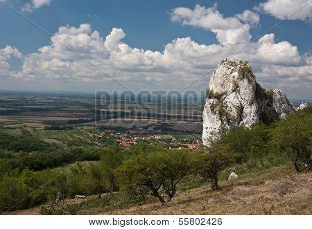 vineyard Palava hills Czech Republic