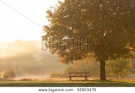 Early morning scene in the park