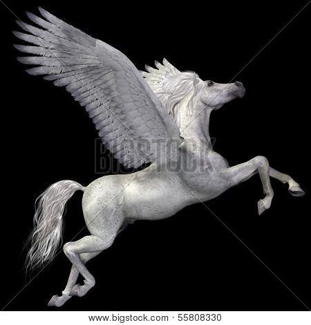 White Pegasus Profile