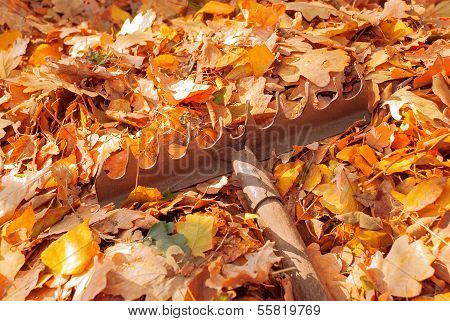 Bunch Of Autumn Leaves