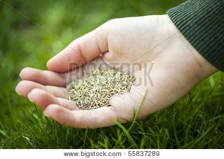 Hand Holding Grass Seed