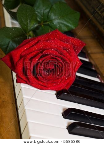 Red Rose On Keys