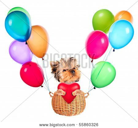 valentine dog flying in a basket with balloons