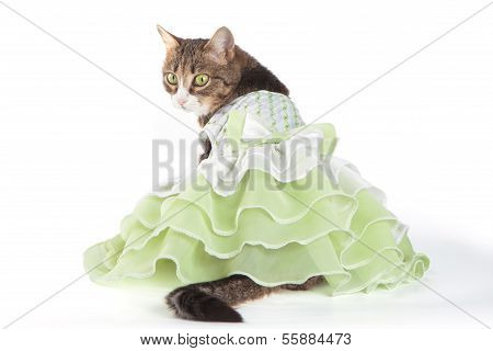 Cat in green frilling dress on white background