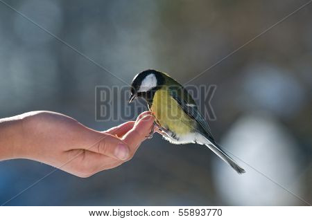 Feed Of Little Bird