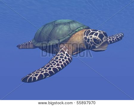 Sea turtle - 3D render