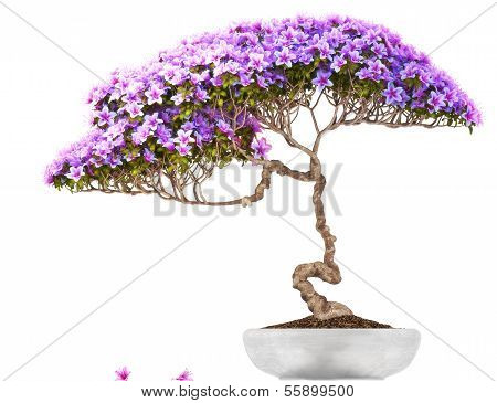 Bonsai potted tree