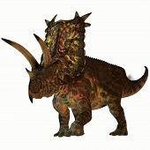 Постер, плакат: Pentaceratops On White